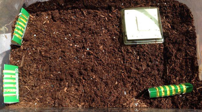 カブトムシの容器に土を足す