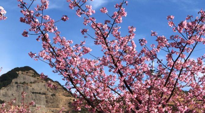 河津桜を見に津久見にドライブ。ついでに間元港の最先端にも行ったよ!